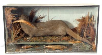 Thomas E Gunn taxidermy case Otter with Fish in Naturalistic setting estimate 300 400